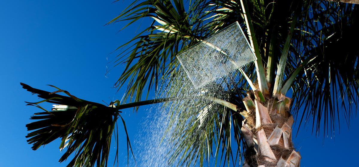 palmtree-closeProduct3